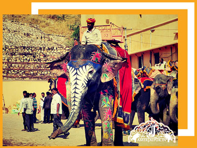 elephant-ride-in-amer